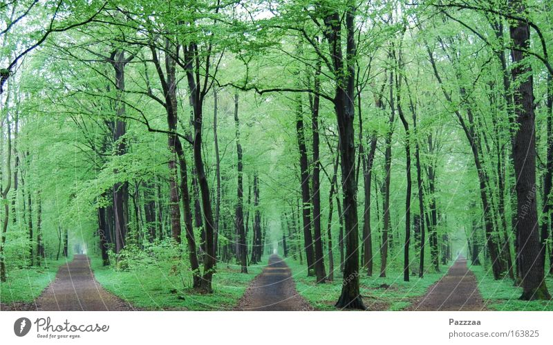 Nature Tree Plant Forest Spring Lanes & trails Landscape Hiking Discover Time Road junction Equal Decide Disorientated