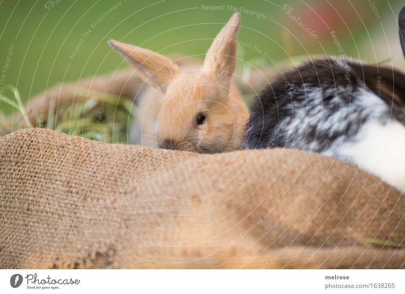 Green White Relaxation Animal Black Baby animal Meadow Grass Brown Together Pair of animals To enjoy Cute Soft Curiosity Easter