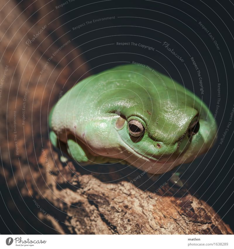 the candidate Tree Animal Frog 1 Sit Friendliness Brown Green Smiling Overweight Inflated broadmouthed Colour photo Subdued colour Exterior shot Deserted