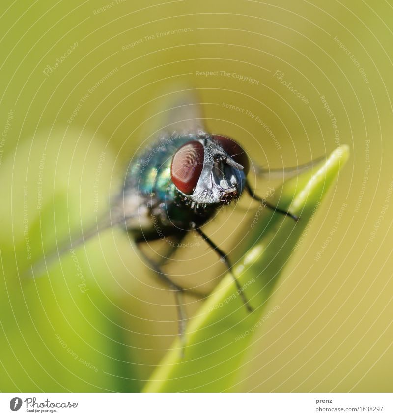 Nature Green Animal Environment Wild animal Fly Sit Beautiful weather Insect Compound eye