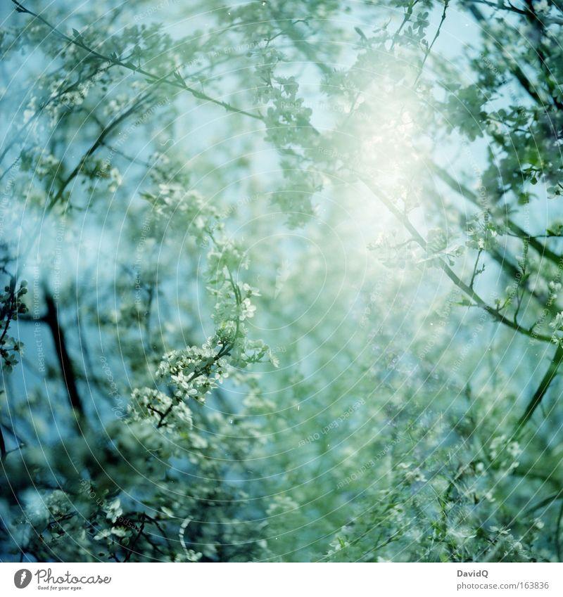 Nature Sky White Tree Blue Plant Leaf Life Blossom Spring Freedom Happy Dream Fresh Growth Friendliness