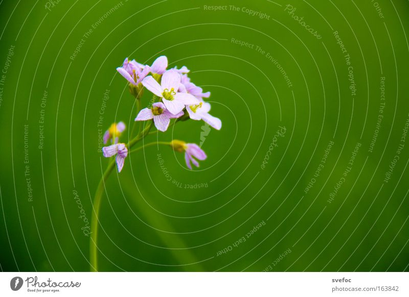 Nature Beautiful Flower Plant Meadow Blossom Spring Contentment Field Small Elegant Fresh Esthetic Growth Thin Pure