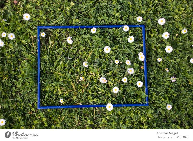 Nature White Green Blue Plant Relaxation Meadow Grass Spring Park Fresh Dresden Daisy Flower Safety (feeling of) Frame