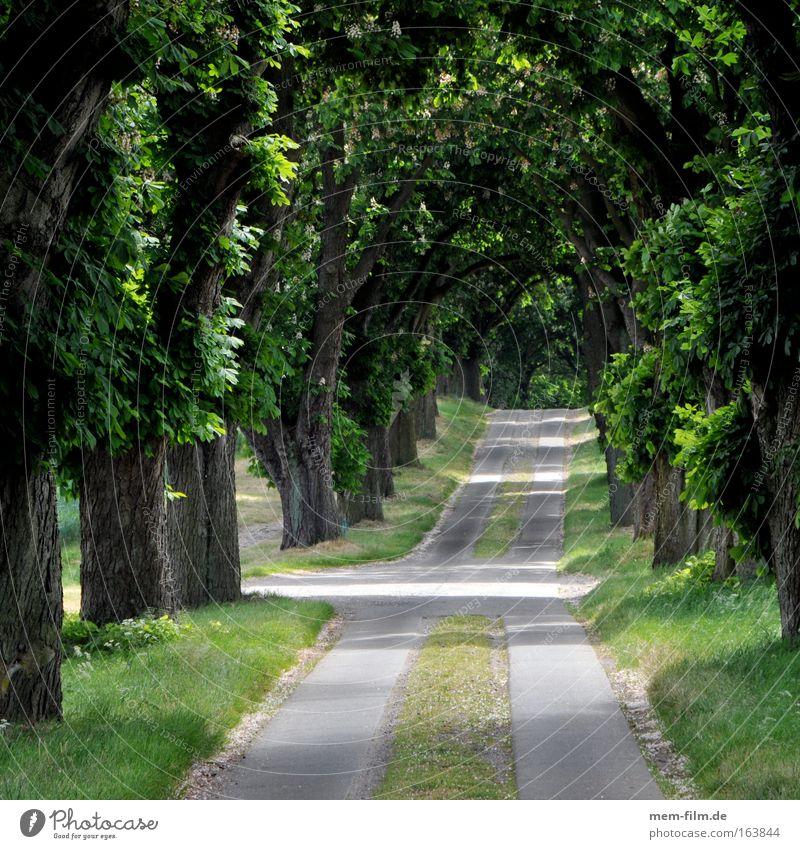 Nature Tree Flower Green Plant Leaf Street Lanes & trails Landscape Air Environment Earth Climate Elements Avenue Crossroads