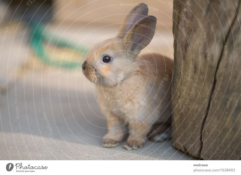 Beautiful Relaxation Animal Baby animal Style Small Garden Gray Brown Contentment Elegant Wait Cute Soft Break Easter