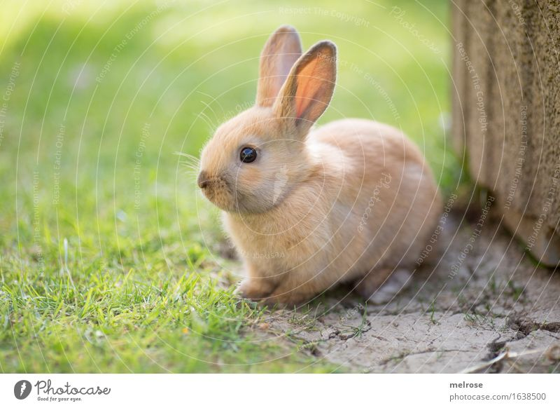 so a liabs Gschau ... Easter Beautiful weather Grass Garden Meadow Animal Pet Animal face Pelt Pygmy rabbit Rodent Hare ears mammals Snout 1 Baby animal