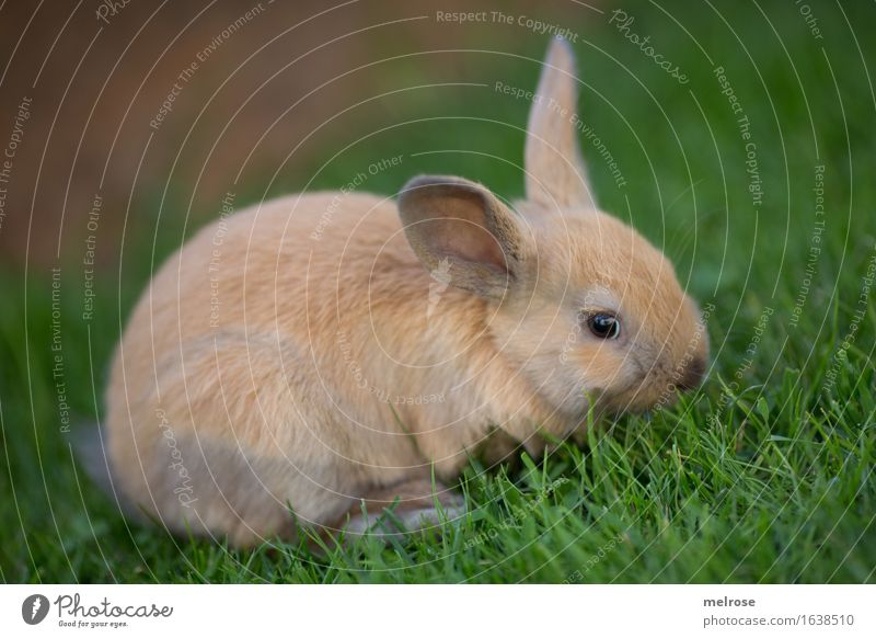 Green Beautiful Relaxation Animal Meadow Grass Small Brown Contentment Pair of animals To enjoy Cute Adventure Soft Friendliness Near