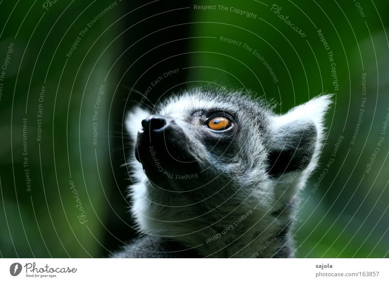 Green Calm Animal Gray Dream Wait Hope Future Soft Animal face Trust Longing Pelt Zoo Cute Exotic