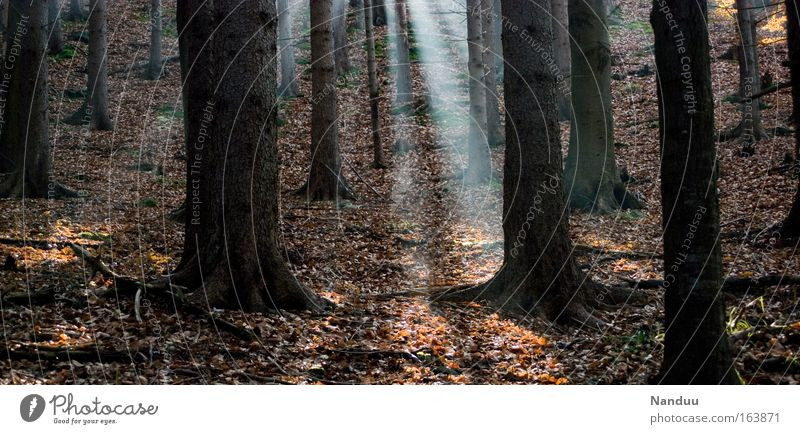 Nature Tree Plant Calm Loneliness Forest Relaxation Autumn Environment Moody Brown Earth Fog Hiking Elements Infinity