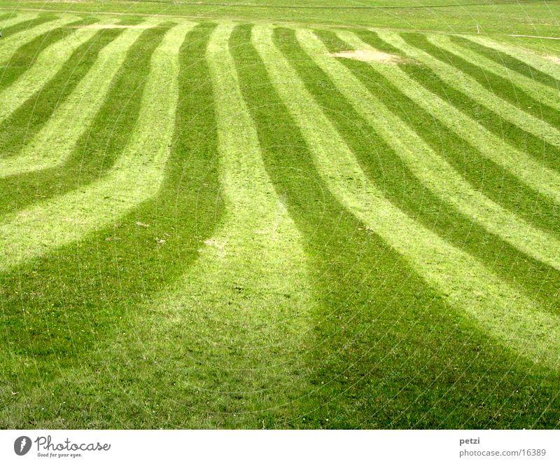 Green Dark Meadow Spring Bright Stripe
