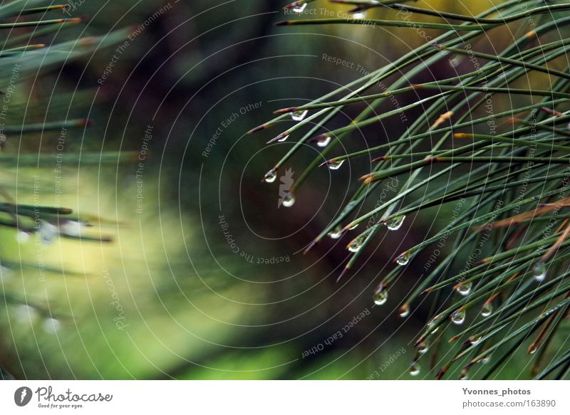 Tears of nature Environment Nature Water Drops of water Spring Autumn Weather Bad weather Rain Thunder and lightning Plant Tree Bushes Foliage plant Wild plant