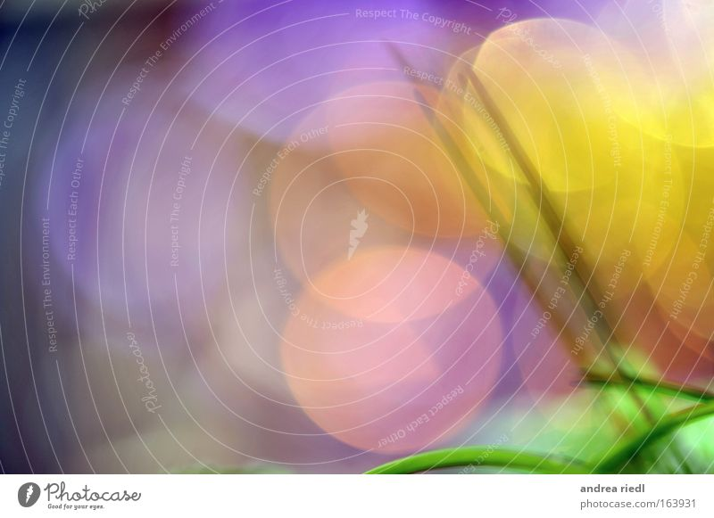 Green Blue Plant Yellow Style Grass Happy Bright Pink Fresh Happiness Abstract Round Violet Blossoming Friendliness