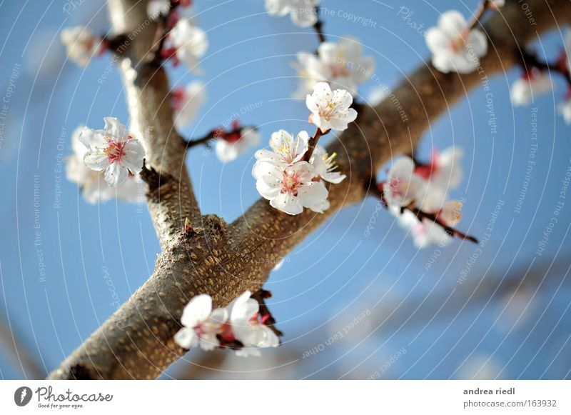 Nature Sky White Tree Flower Blue Plant Blossom Spring Park Landscape Brown Power Healthy Pink Food