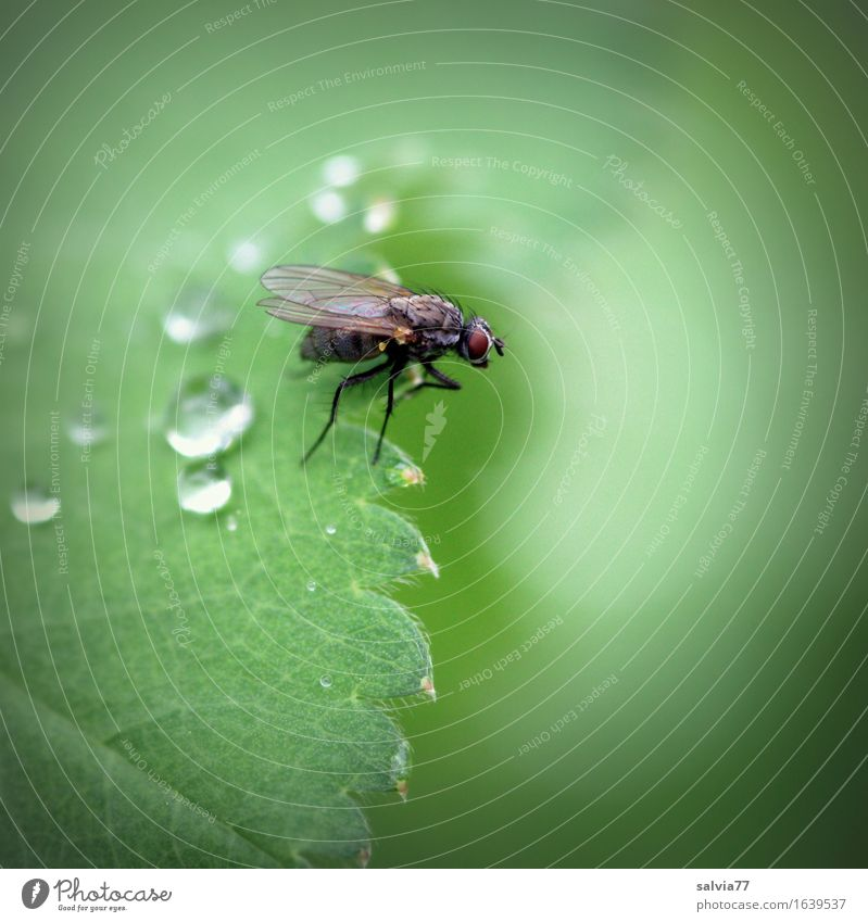 rain break Nature Plant Animal Drops of water Rain Leaf Foliage plant Dead animal Fly Wing 1 Crawl Sit Wait Green Uniqueness Life Ease Center point