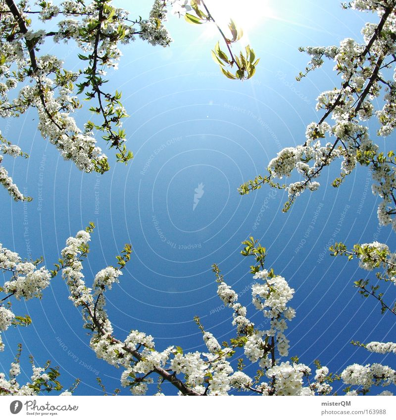 Sky Nature Beautiful Sun Summer Calm Environment Life Spring Air Healthy Branch Beautiful weather Blossoming Twig Fragrance