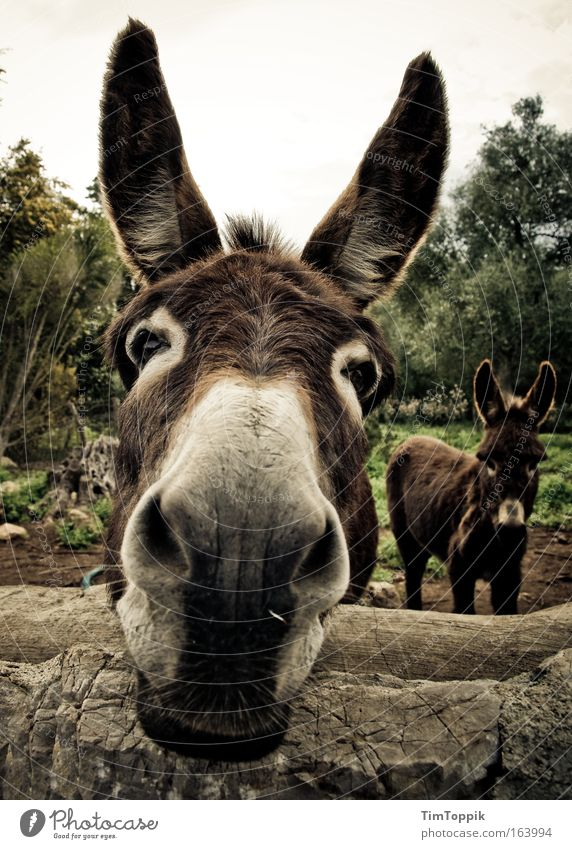 Animal Brown Field Ear Animal face Curiosity Cute Snout Donkey Farm animal Mule