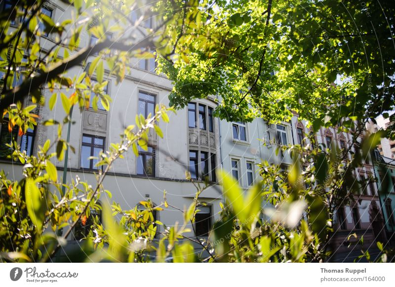 House in the green Colour photo Exterior shot Deserted Day Sunlight Back-light Spring Beautiful weather Plant Tree Leaf Offenbach Germany Hesse Europe Town