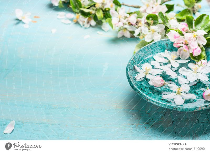 Nature Plant Water Flower Leaf Blossom Spring Background picture Healthy Style Design Pink Decoration Blossoming Wellness Meditation