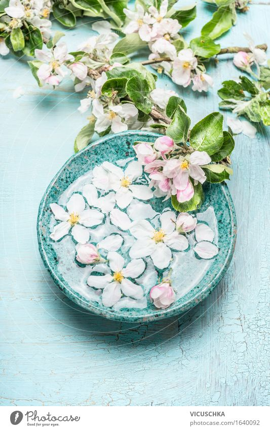 Floating flowers in a turquoise blue bowl Style Design Beautiful Personal hygiene Cosmetics Healthy Alternative medicine Wellness Life Well-being Senses