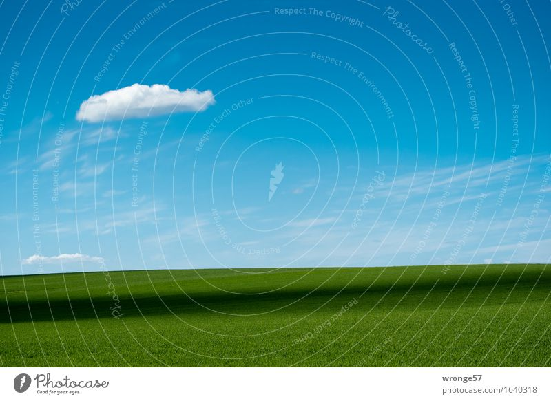 Sky Nature Blue Plant Green White Landscape Clouds Black Spring Horizon Field Air Earth Beautiful weather Infinity