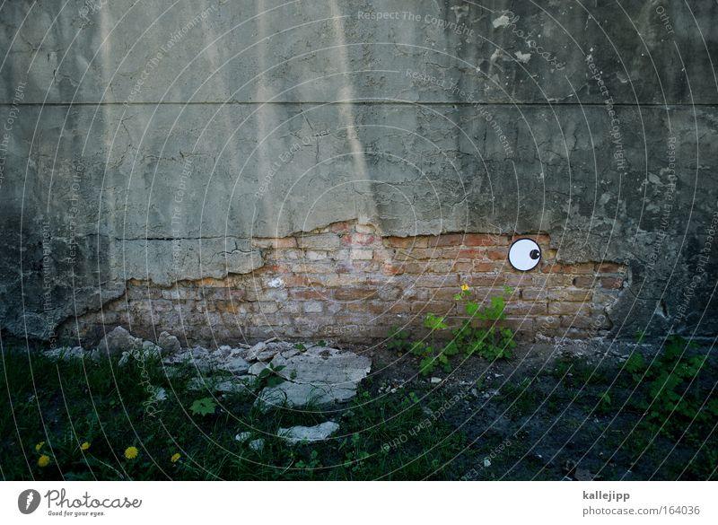 Beautiful Plant Joy Beach Animal Wall (building) Grass Stone Wall (barrier) Coast Fish Watercraft Zoo Brick Trashy