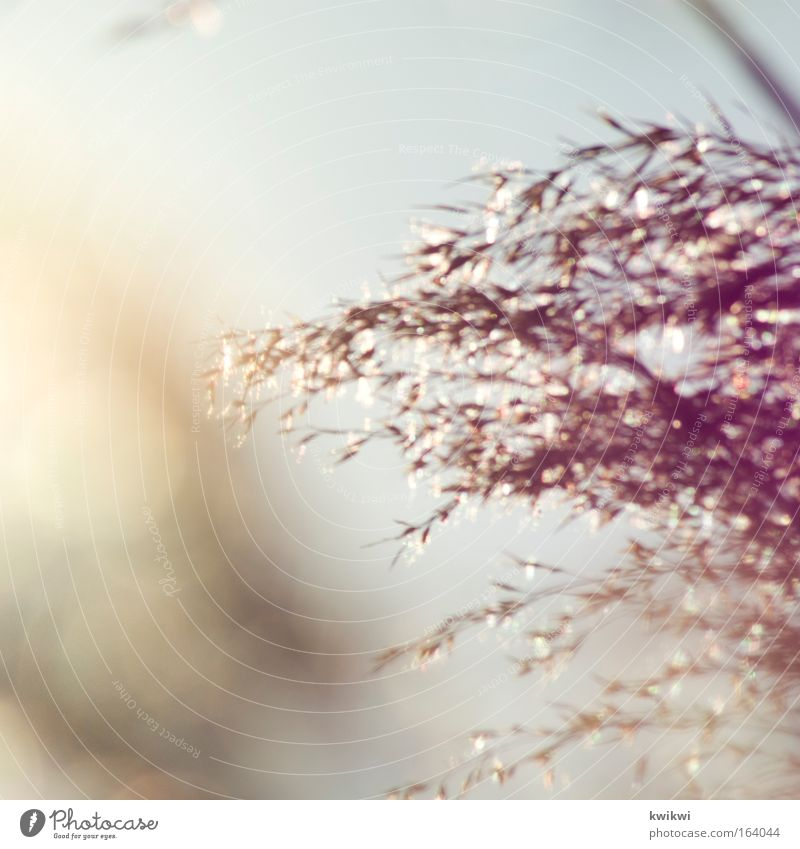 colour play Nature Plant Grass Bushes Yellow Gold Pink Red Silver Spring fever Warm-heartedness Colour photo Subdued colour Exterior shot Detail Deserted