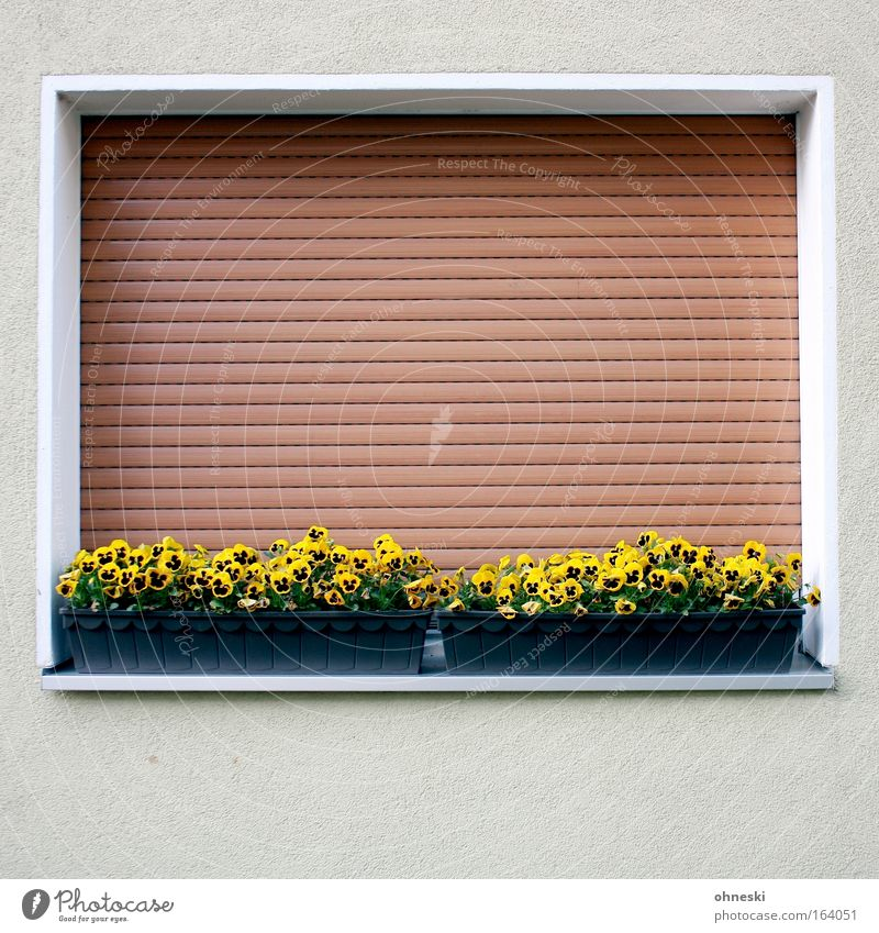 Flower House (Residential Structure) Window Spring Sadness Building Architecture Grief Fatigue Manmade structures Venetian blinds Guilty Detached house