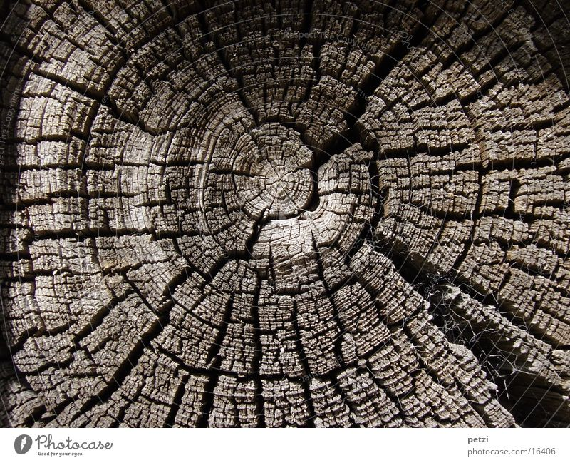 annual rings Tree Sadness Grief Death Decline Transience Tree section Als Things Circle Crack & Rip & Tear Derelict Colour photo Exterior shot Detail Pattern