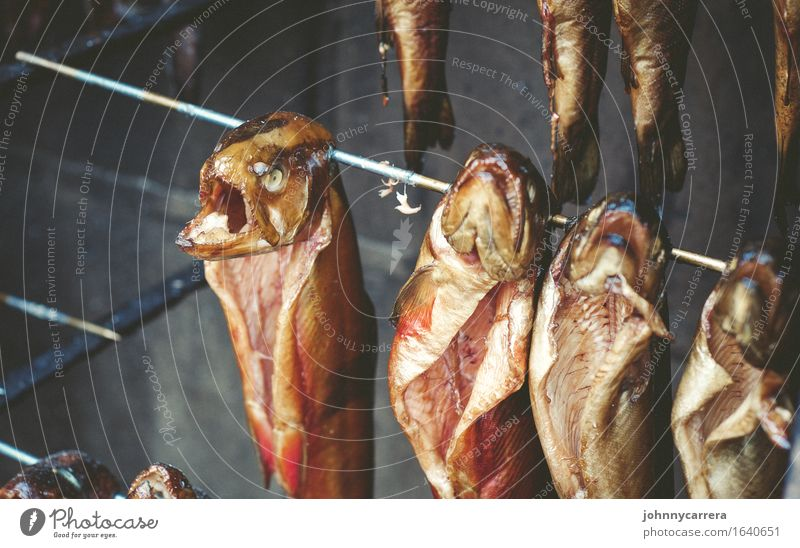 fish heads Food Fish Fishing (Angle) Ocean Animal Water Dead animal Group of animals Barbecue (apparatus) Rust Smoke Eating Hang Sell Threat Disgust Creepy