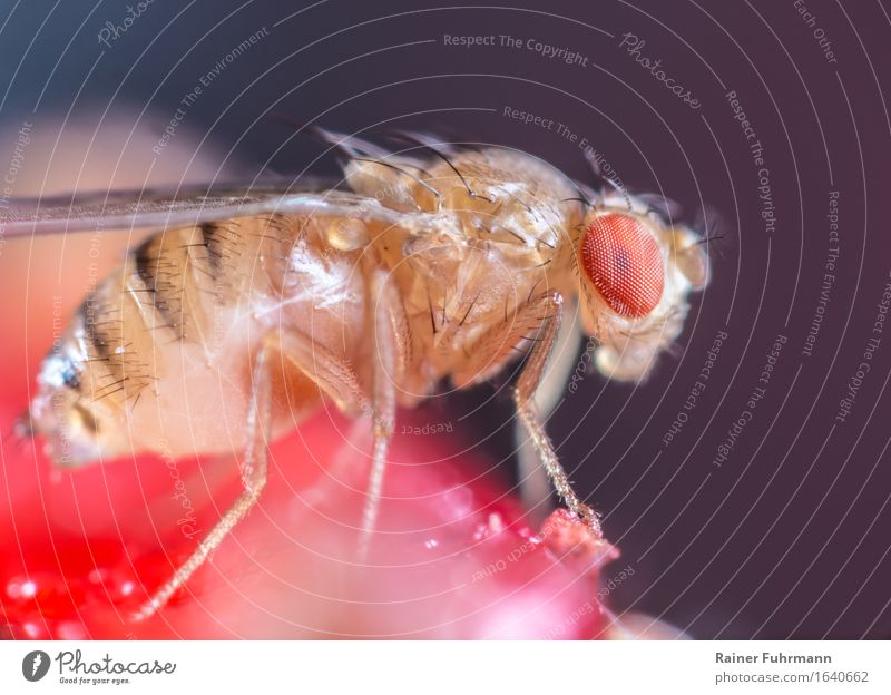 Nature Animal Wild animal Fly To feed