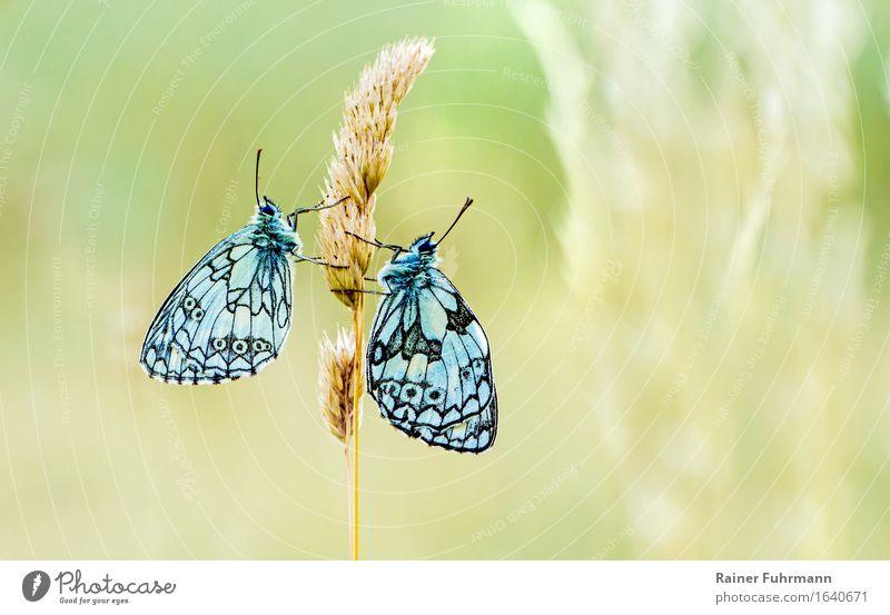 Animal Love Wild animal Sit Butterfly