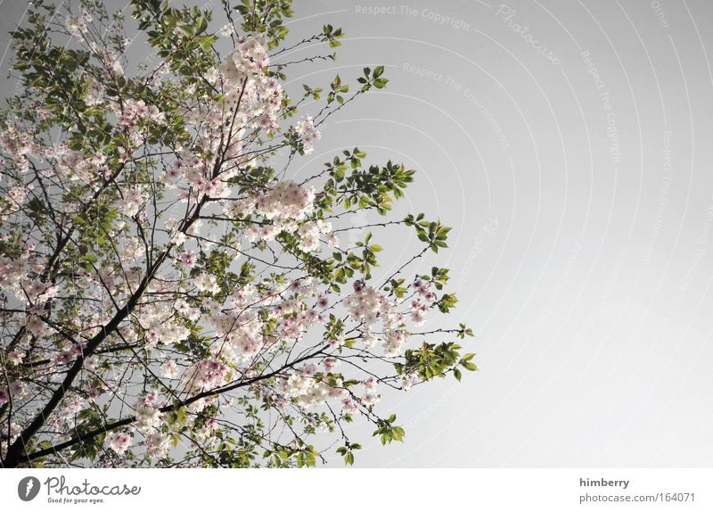Nature Green Beautiful Tree Plant Calm Relaxation Landscape Gray Spring Park Contentment Pink Climate Fresh Esthetic