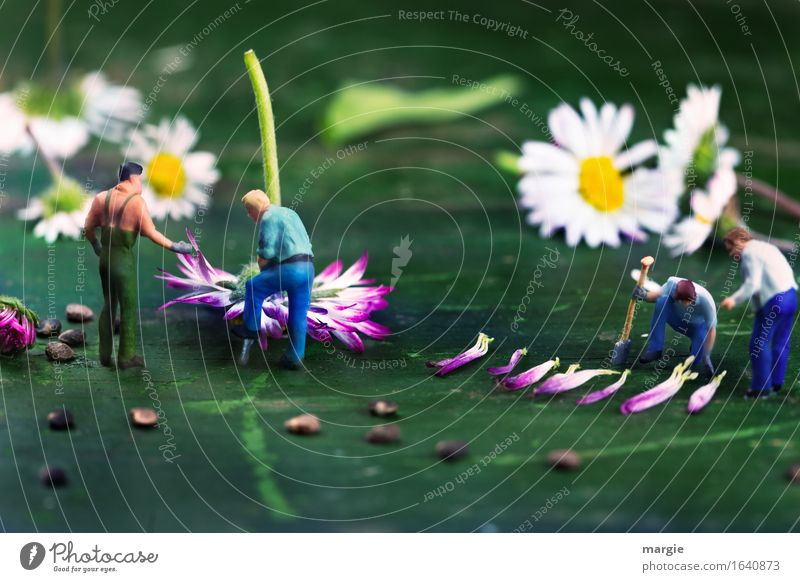 Miniwelten - Daisy harvest Work and employment Profession Gardening Workplace Agriculture Forestry Human being Masculine Man Adults 4 Nature Plant Flower Leaf