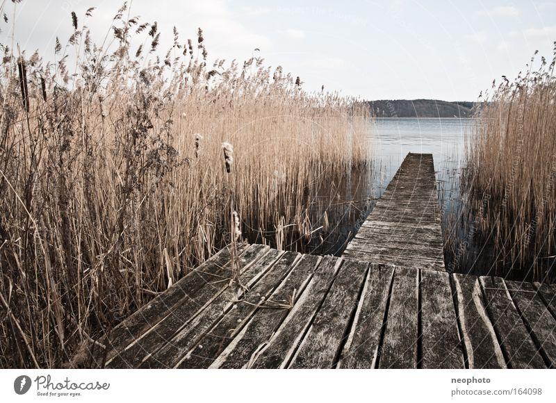 Nature Water Sky Calm Dark Relaxation Wood Lake Moody Brown Horizon Hope Bushes Common Reed Footbridge Lakeside