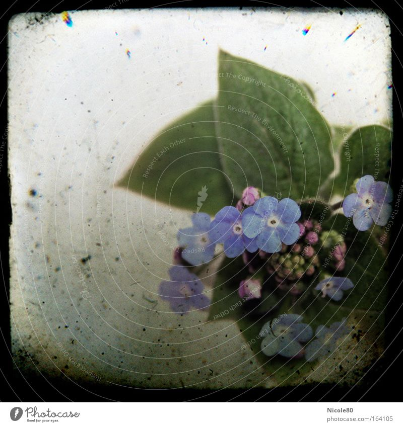 Poetry Album II Friendship book Cliche Blue Forget-me-not Memory Remember Plant Blossom Spring flowering plant Slide Frame Old Retro Colours Pallid Kitsch