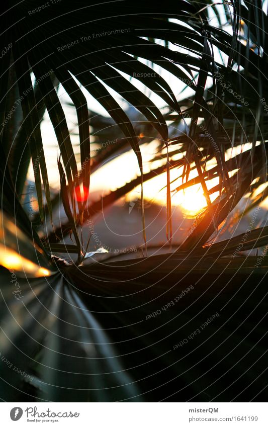 From the Jungle III Environment Nature Esthetic Sun Sunset Sunlight Sunbeam Virgin forest Undergrowth Palm tree Palm frond South Mediterranean Vacation mood