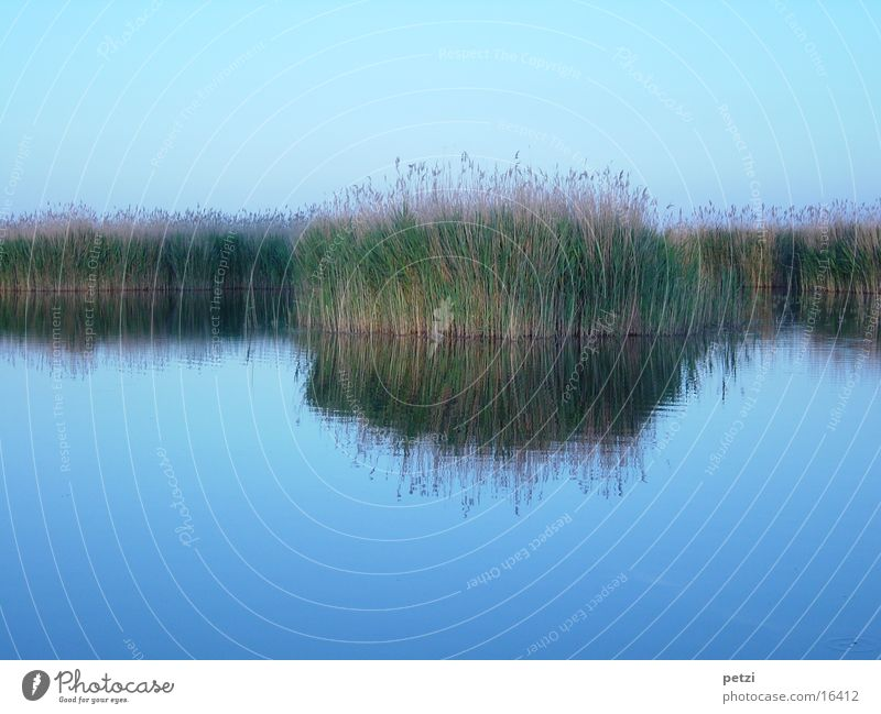 canopy endoscopy Water Sky Lake Above Under Blue Brown Green Peaceful Longing Loneliness Idyll Inspiration Endorheic basin Reeds Colour photo Multicoloured