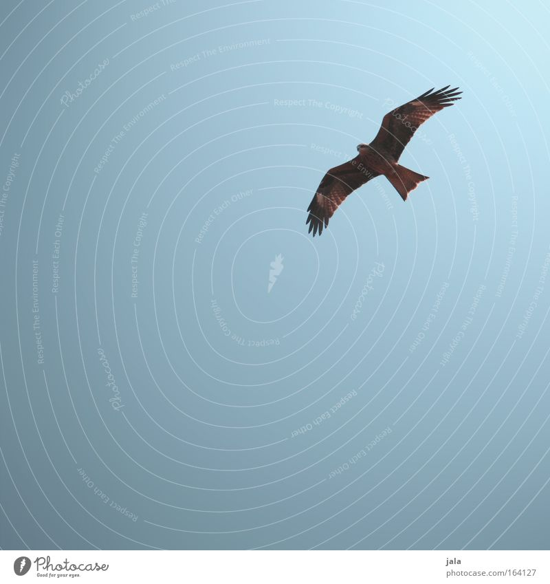 high achiever Colour photo Exterior shot Deserted Copy Space left Copy Space bottom Neutral Background Day Sunlight Cloudless sky Animal Bird Freedom Peace