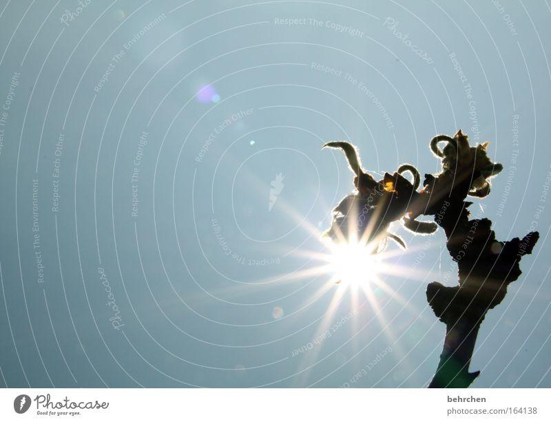 Nature Tree Sun Summer Lamp Dream Bright Star (Symbol) Illuminate Branch Beautiful weather Blossoming To enjoy Cloudless sky