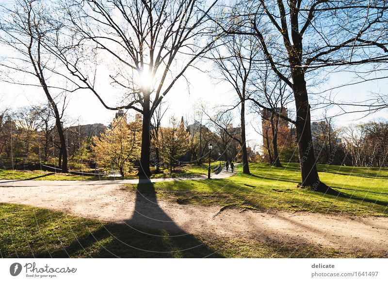 central park Vacation & Travel Tourism Trip Far-off places Freedom Sightseeing City trip Garden Nature Sky Sun Spring Beautiful weather Plant Tree Grass Bushes