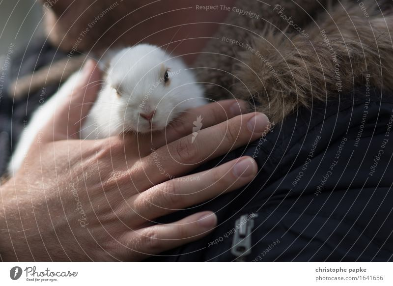 Easter egg bringer Animal Pet 1 Cute Love of animals Hare & Rabbit & Bunny Caress Cuddling To hold on Curiosity Carrying Colour photo Exterior shot Day Light