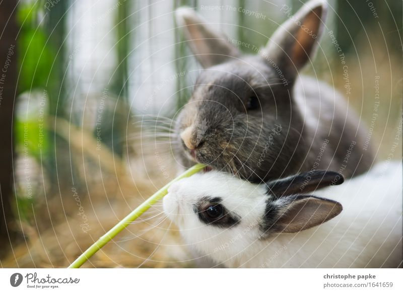 rabbit lunch Animal Pet Animal face Pelt Petting zoo 2 Baby animal To feed Feeding Happiness Cuddly Cute Contentment Together Love of animals Teamwork Enclosure