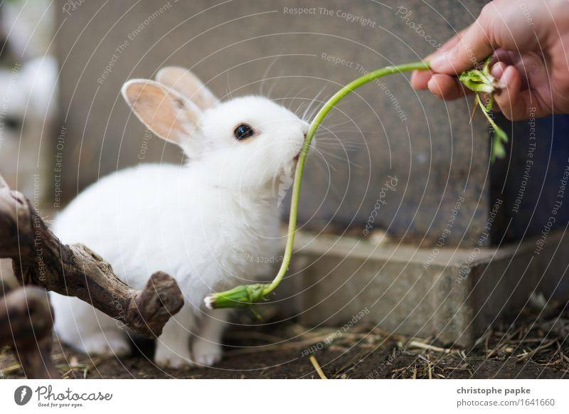 White Hand Animal Garden Cute Curiosity Pet Animal face Hare & Rabbit & Bunny Feeding Love of animals Barn