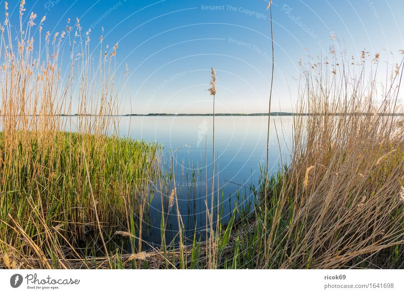 Landscape at the Achterwasser on the island Usedom Relaxation Vacation & Travel Tourism Nature Water Cloudless sky Coast Bay Lake Blue Romance Idyll Calm