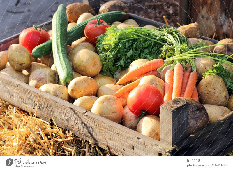 vegetable box Food Vegetable Herbs and spices Potatoes Tomato Cucumber Carrot Nutrition Organic produce Vegetarian diet Healthy Life Eating Thanksgiving Box