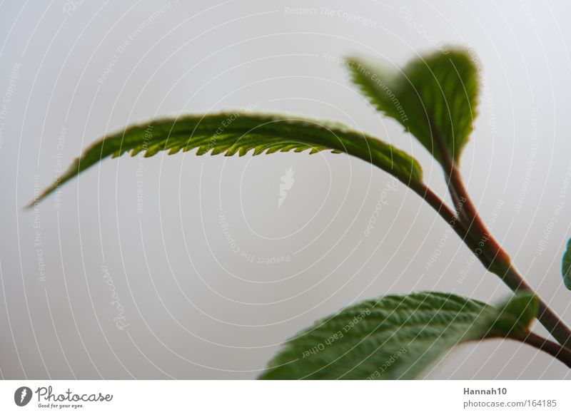 Nature Green Leaf Spring Gray Esthetic Bushes Natural