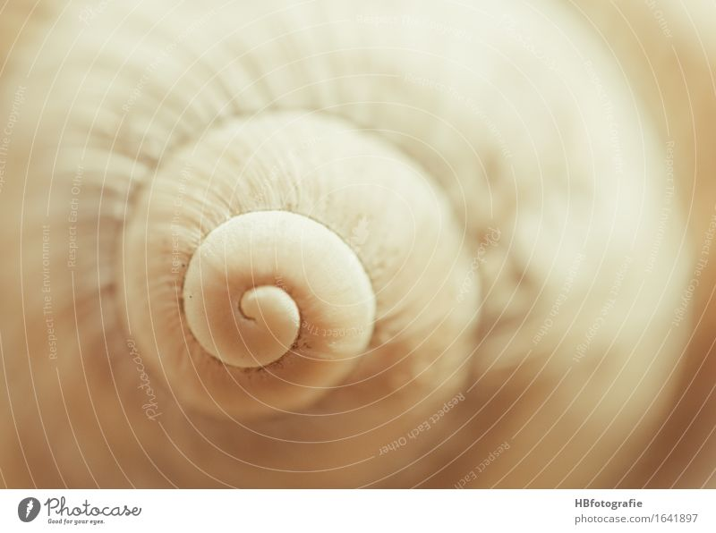 snail shell Nature Animal Snail Slimy Warmth Protection Safety (feeling of) Indifferent Snail shell Mollusk Spiral Beige Earthy Colour photo Exterior shot