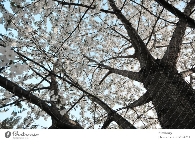 Nature White Tree Plant Leaf Calm Landscape Spring Blossom Bright Park Weather Climate Fresh Esthetic Beautiful weather