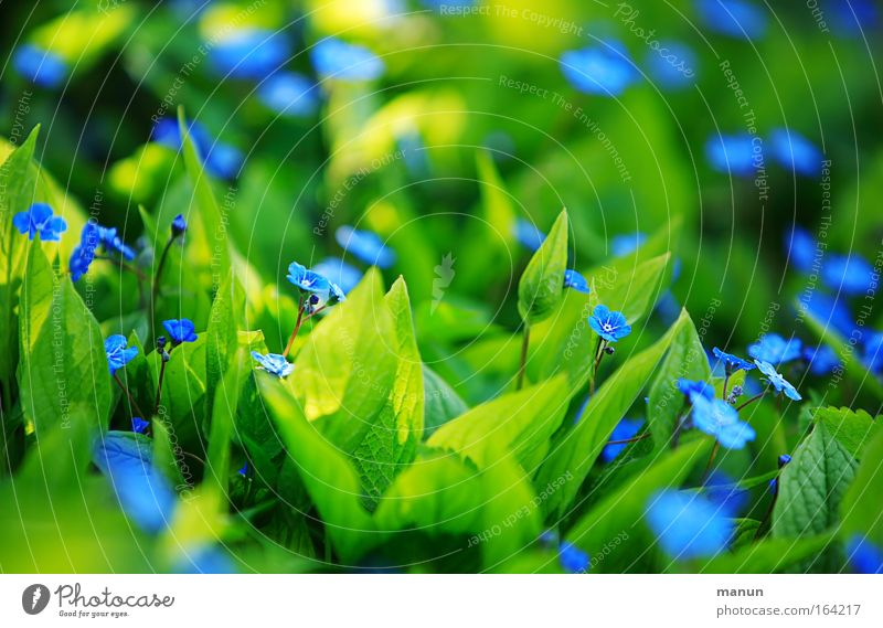 Nature Beautiful Flower Green Blue Plant Summer Yellow Colour Blossom Spring Park Bright Moody Design Fresh
