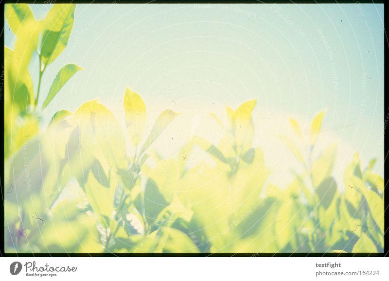 Nature Sky Sun Green Plant Summer Joy Animal Environment Retro Bushes Longing Idyll Anticipation